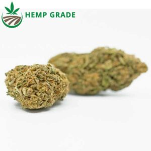 Buy Amnesia Haze CBD Hemp Flower