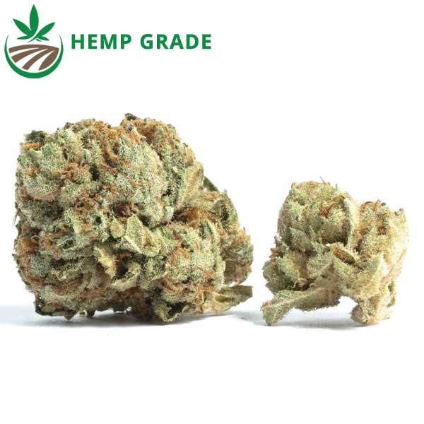 Buy Electric Dream CBD Hemp Flower