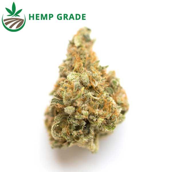 Buy Mango Kush CBD Hemp Flower Online